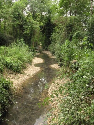 cherry_hinton_brook_improvement